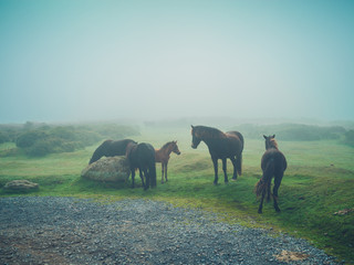 Horse standing in the fog