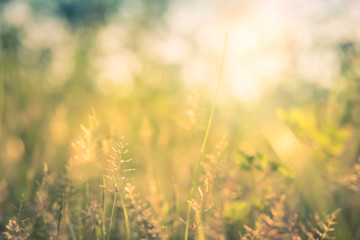 Vintage style and romantic abstract nature view of grass flower