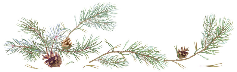 Horizontal border with pine branches and cones, needles on white background, hand digital draw, watercolor style, decorative botanical illustration for design, Christmas tree, vector Wall mural