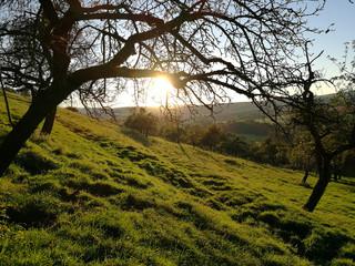 sundown between trees