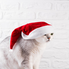 Cat in Santa Claus red hat