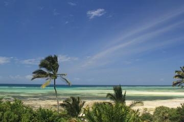 Tropical Zanzibar