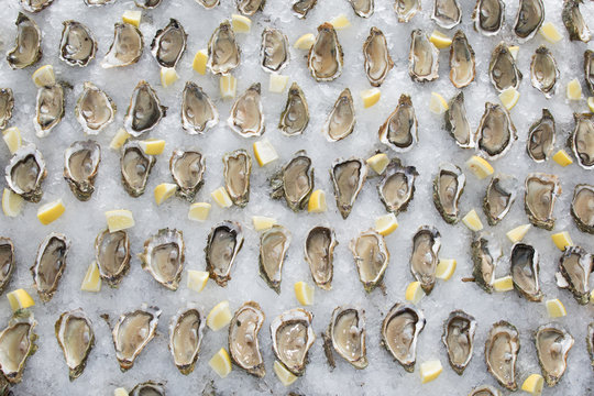 open oysters with lemon and ice for background