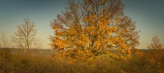 Landschaft Herbst Panorama