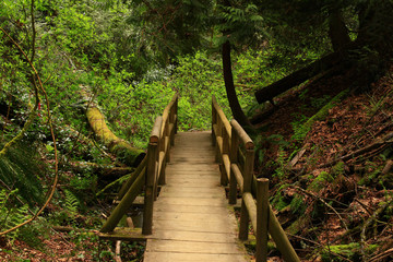 a picture of an Pacific Northwest forest trail