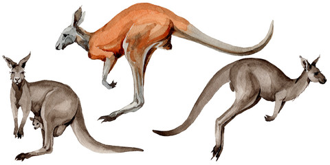 Exotic kangaroo wild animal in a watercolor style isolated. Full name of the animal: kangaroo, wallaby, wallaroo. Aquarelle wild animal for background, texture, wrapper pattern or tattoo. Wall mural