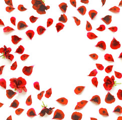 red flower petals breeze, isolated on white