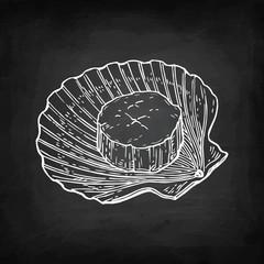 Chalk sketch of scallop