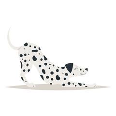 cute dalmatian dog