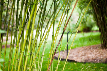 Bamboo plants with details in Royal Kew Gardens, London