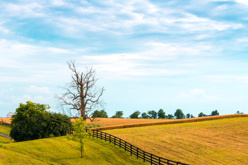 Farm fields with crop. Country landscape