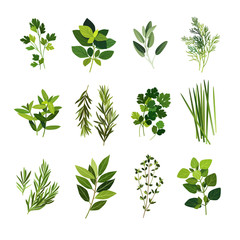 Clip art illustrations of common culinary herbs such as parsley, basil, sage, dill, mint, rosemary, coriander, chives, tarragon, bay leaf, thyme and oregano