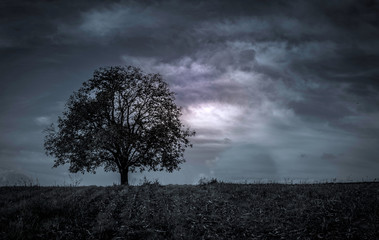 Beautiful dark landscape of field with single tree