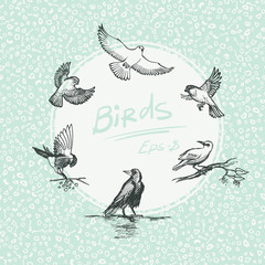 Set of sketch bird. Vector illustration