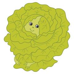 Vector Cartoon Green Cabbage