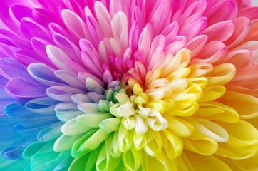 レインボーの花