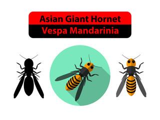 Asian Giant Hornet or Vespa Mandarinia on white