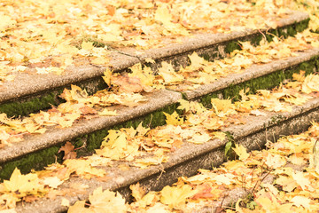 Yellow leaves on wet black steps. Autumn