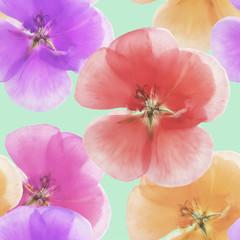 Geranium, cranesbill, pelargonium. Seamless pattern texture of flowers. Floral background, photo collage