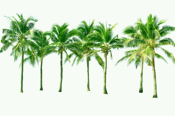 Palm and coconut tree at the beach