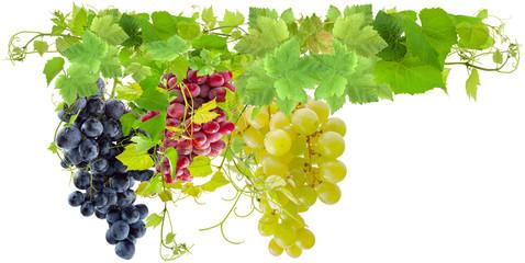 Wall Mural - grappes de raisins rouge, blanc et rosé sur fond blanc