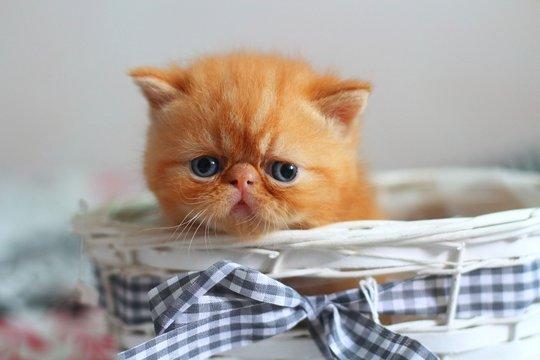 cat,red, kitten, little, mother, tenderness, photo