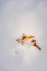 Beautiful golden leaves in the snow -winter postcard background