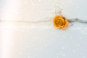small rose on a brick wall, painted white. magic glow effect