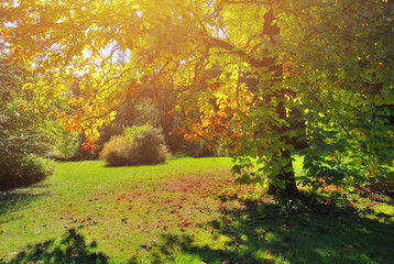 Early Fall Foliage Autumn Trees with Sunlight in Pannonhalma Arboretum, Hungary