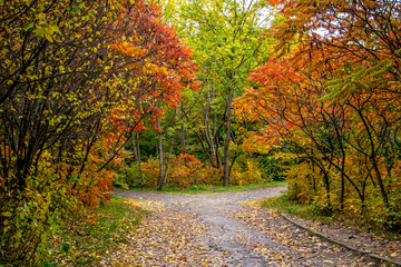 Beautiful autumn landscape. Autumn landscape with colorful forest, park. autumn view. Europe, America, Asia