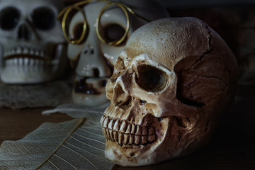 Still life photography human skulls in dark vintage tone