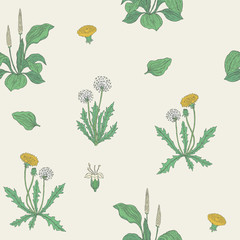 Gorgeous natural seamless pattern with flowering herbaceous plants. Beautiful wild flowers and blooming herbs - dandelion and plantain. Vector illustration for wrapping paper, wallpaper, backdrop.