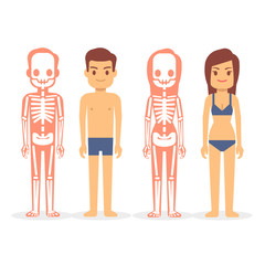 Man and woman, male and female skeletons isolated on white background