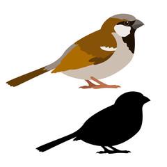 sparrow vector illustration style flat black silhouette