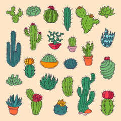 Cactus home nature vector illustration of green plant cactaceous tree with flower