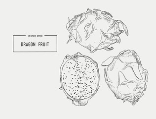 Vector hand drawn set of exotic fruits. Isolated pitaya. dragon fruit.
