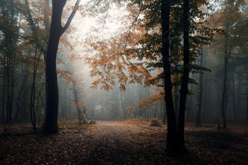 autumn in misty forest