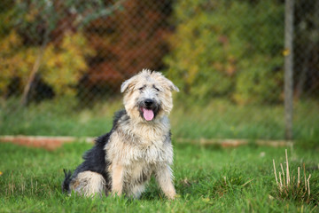 adorable mixed breed dog sitting outdoors