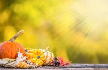 Autumn concept. Pumpkins, corncobs and leaves in garden on wooden background