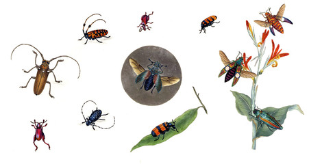 Illustration of bugs on a white background.