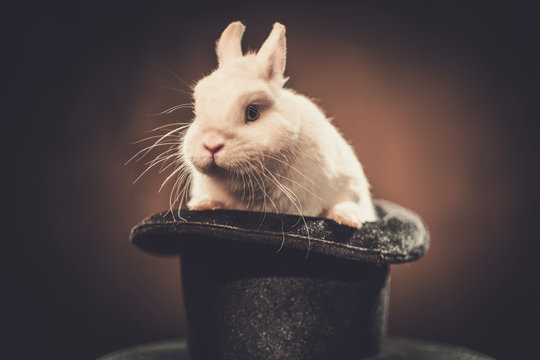Little rabbit in a magician hat