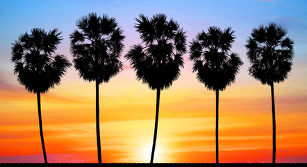 silhouette palm tree on sunset