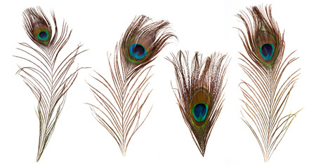 Fototapeta premium set of beautiful and colorful peacock feathers isolated on white background