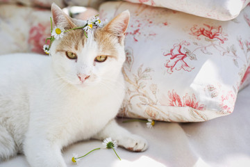 Cat wearing a knotted flowers crown and looking at camera