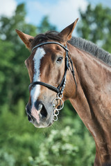 portrait of hobbyhorse . summer