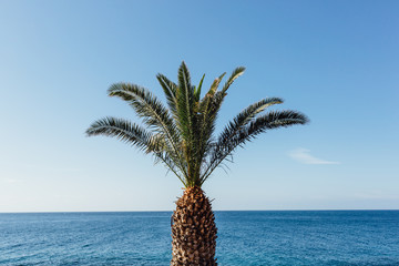 Palm tree in front of the ocean