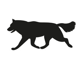 Silhouette of the dog on the white background.