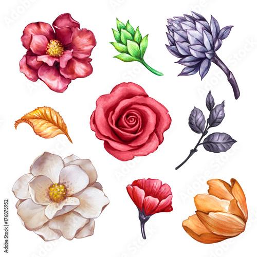 "Dark Red Roses Flowers Watercolor Botanical Art Boho: ""watercolor Floral Set, Autumn Flowers, Rose, Tulip"
