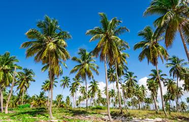 Palm Ocean Sky caribbean coast