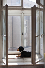 Cute black dog sitting on the window sill